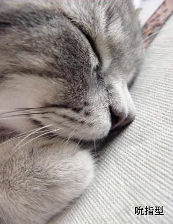 貓的睡姿02