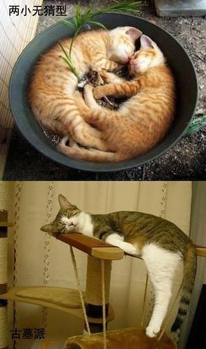 貓的睡姿08