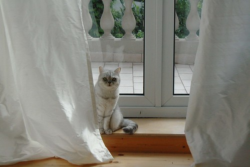 Checking_out_the_curtains