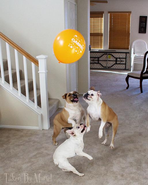 dogs balloon