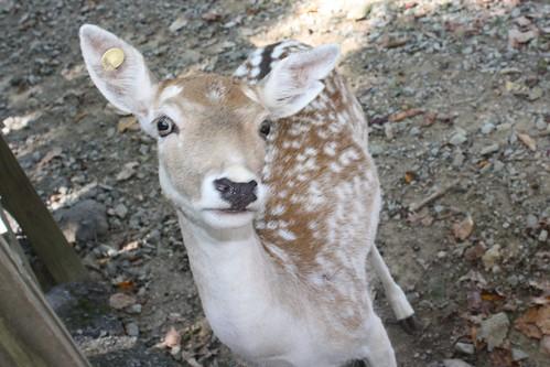 It's Bambi!