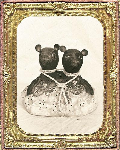 Teddy Bear Siamese Twins