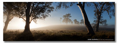 Welcome Baby Levi (Magic moment during the hour before dawn) ([ Kane ]) Tags: birthday light baby mist fog canon dawn ray glow shine farm qld levi kane alana 6x17 gledhill kanegledhill kanegledhillphotography levicliffordgledhill