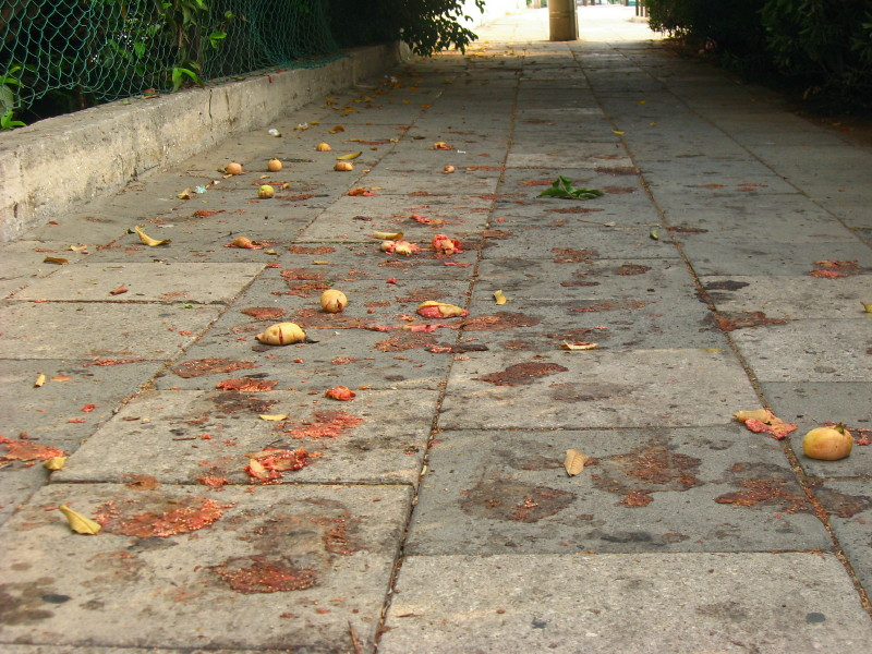 25-09-2010-fruit-on-pavement