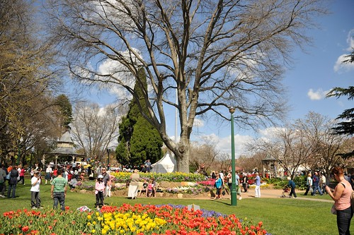 Bowral tulip festival