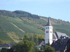Weinberg bei Waldrach