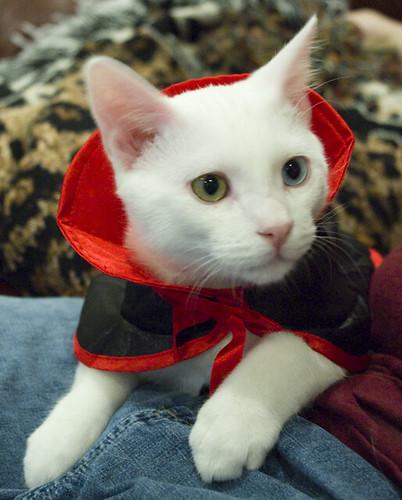 Kitty Vampire