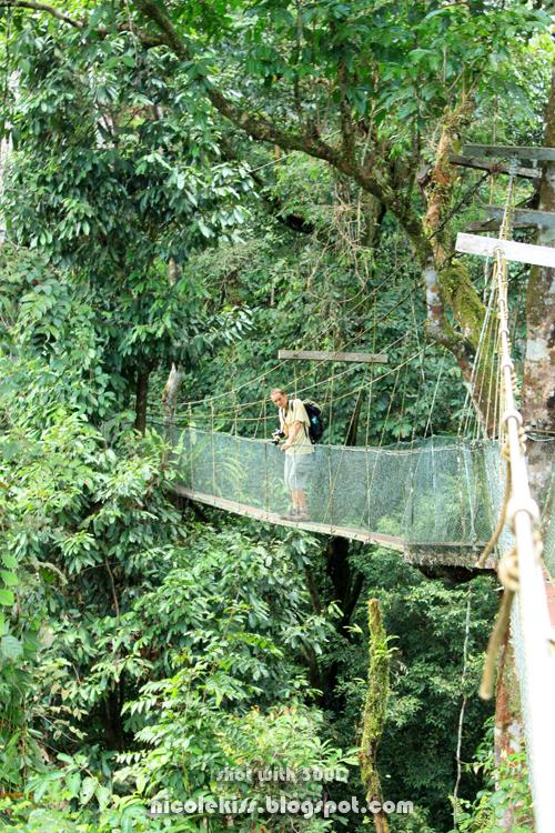 photographer on canopy bridge