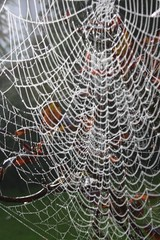 Cobwebs (keepinsidethelines) Tags: autumn hampshire cobwebs