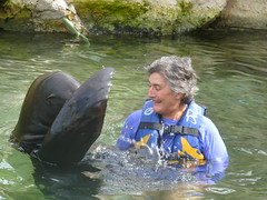 mary alice (ABC Dolphin Trainer Academy) Tags: dolphin manatee cancun sealion trainer puertoaventuras trainingsession dolphindiscovery animaltraining sealiontrainer entrenadordelobos positivereinforcementtraining entrenamientorefuerzopositiva