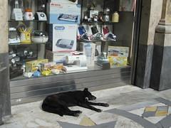 Schlafender Hund in Neapel