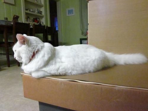 Nilla as a loaf.