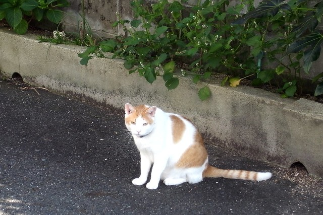 Today's Cat@2010-10-02