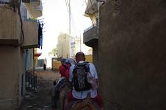 op de kameel (JANKUIT) Tags: ezel uitzicht luxor kop slaapkamer straatbeeld paard nijl kont koets kameel landelijk veulen vreemde cruiseschip kamelen gids kerel galop oversteek koetsen ezelwagen bananentrossen