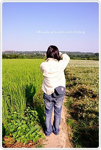 韭菜花田(7)