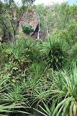 Wangi Falls, Litchfield National Park, Northern Territory, Australia. (Michael J. Barritt) Tags: waterfall australia waterfalls freshwater northernterritory wangifalls litchfieldnationalpark topend