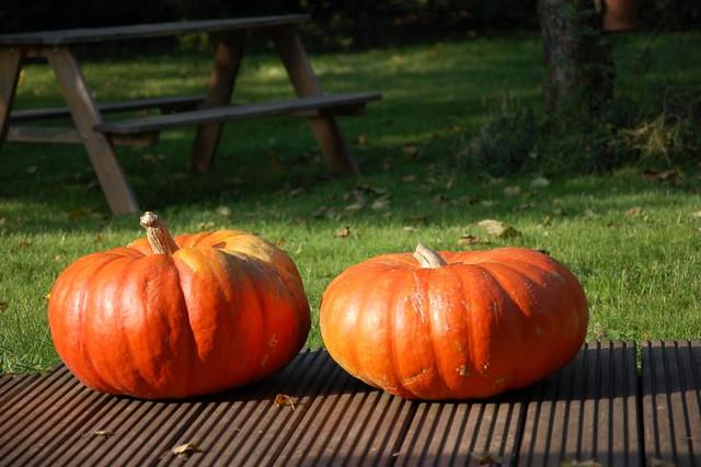 farmers pumpkin