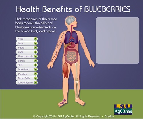 Blueberry_Body_Image