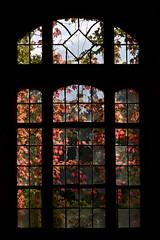Autumn in the Beelitz Heilsttten (joaobambu) Tags: autumn windows red urban berlin broken window leaves germany contraluz decay herbst gegenlicht urbex verfallen beelitz heilsttten explortation