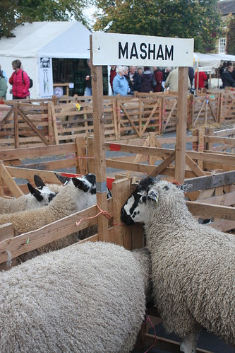 Masham sheep pens