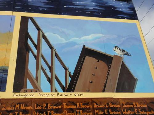 """Endangered Peregrine Falcon, 2009."""