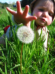 Capturing (Heart felt) Tags: newzealand nature field children spring exploring seeds dandelions greengrass
