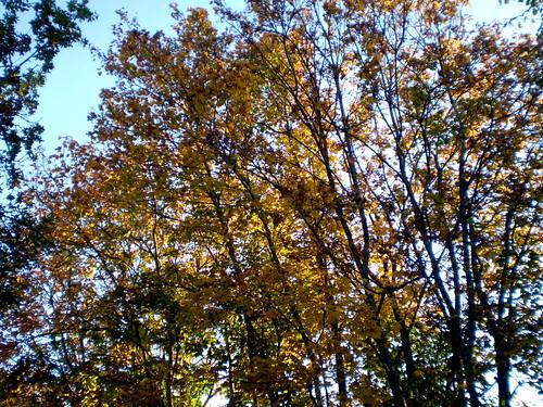 Trees 001