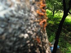 531007 เตาเผาถ่านกรมป่าไม้ 206