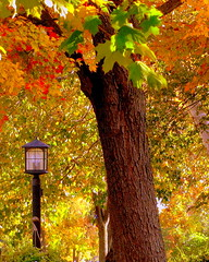 Leaves of October (**Ms Judi**) Tags: autumn trees light orange tree fall lamp colors beautiful leaves yellow wisconsin view fallcolors branches scene autumnleaves lamppost bark lovely godsgift msjudi judistevenson judippc photographybymsjudi peshtigowiscosnin leavesofoctober