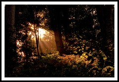 Leading light ( Marlene ) Tags: autumn trees red orange fern green sunshine silhouette fairytale contrast gold nikon glow colours path silhouettes september autumncolours explore glowing rays through sunrays magical shining leading lightrays raysoflight lightsource inthewoods lightpath pathoflight magicallight explored d5000 burstofcolours