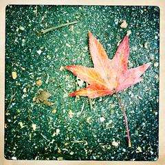 Maple (Chris Arace) Tags: autumn history fall virginia autum w colonial va williamsburg iphone