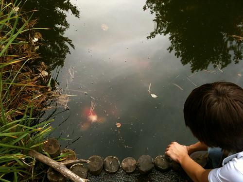 Arboretum Fishies