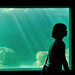 kamogawa seaworld_26