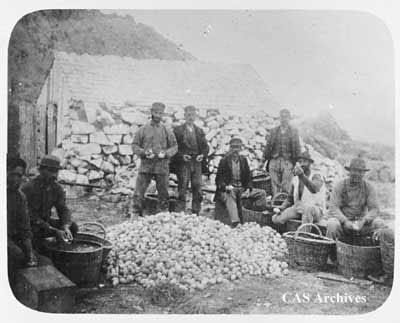 """A weeks egg gathering South Farallon Islands"". Eight men around a pile of eggs."