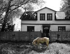 des /hacer (Felipe Smides) Tags: animal tren amor caminos sueños ruinas destino texturas hogar valdivia colorido espacios incompleto smides felipesmides camilamoreno delfindeldeseo