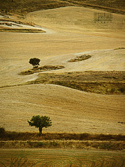 De lomas y rboles... (__Blanca__) Tags: landscape rboles paisaje otoo campos ocre lomas dorado palencia composicin cerrato valledecerrato