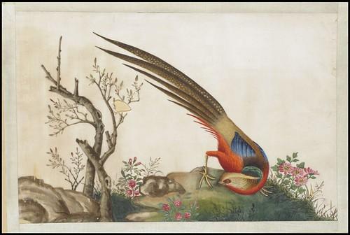 Bird Album f
