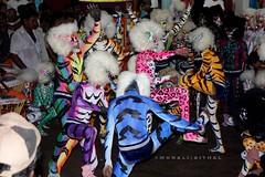 Colorful tigers of Mangalore (Aithal's) Tags: canon eos pili canoneos xsi mangalore huli murali vesha hili 450d mangaloredasara canon450d hulivesha aithal pilivesha 1855is canonrebelxsi rebelxsi canon1855mmis tigerdance canondigitalrebelxsi aithals mangaloredasarahuli mangaloredasarapili mangaloretigerdance