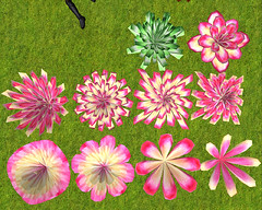 1prim Flowers (2010-10-18)