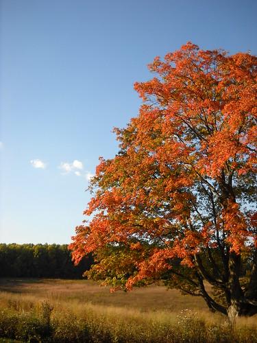Longwood October 2010 079