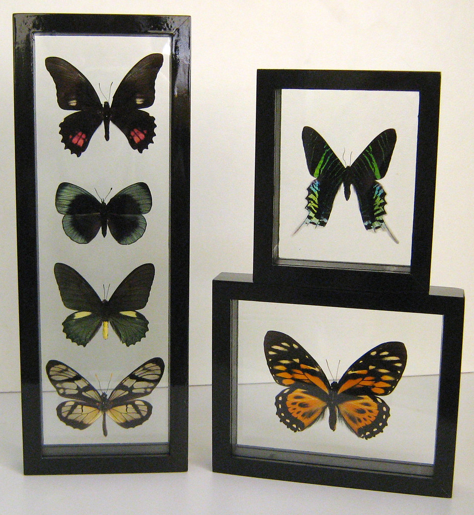 Black Mounted Butterfly Decor Set