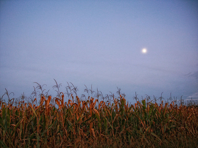 When the moon hits the corn