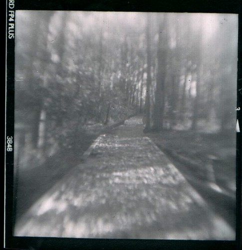 Brownie Hawkeye Flash-The enchanted forest