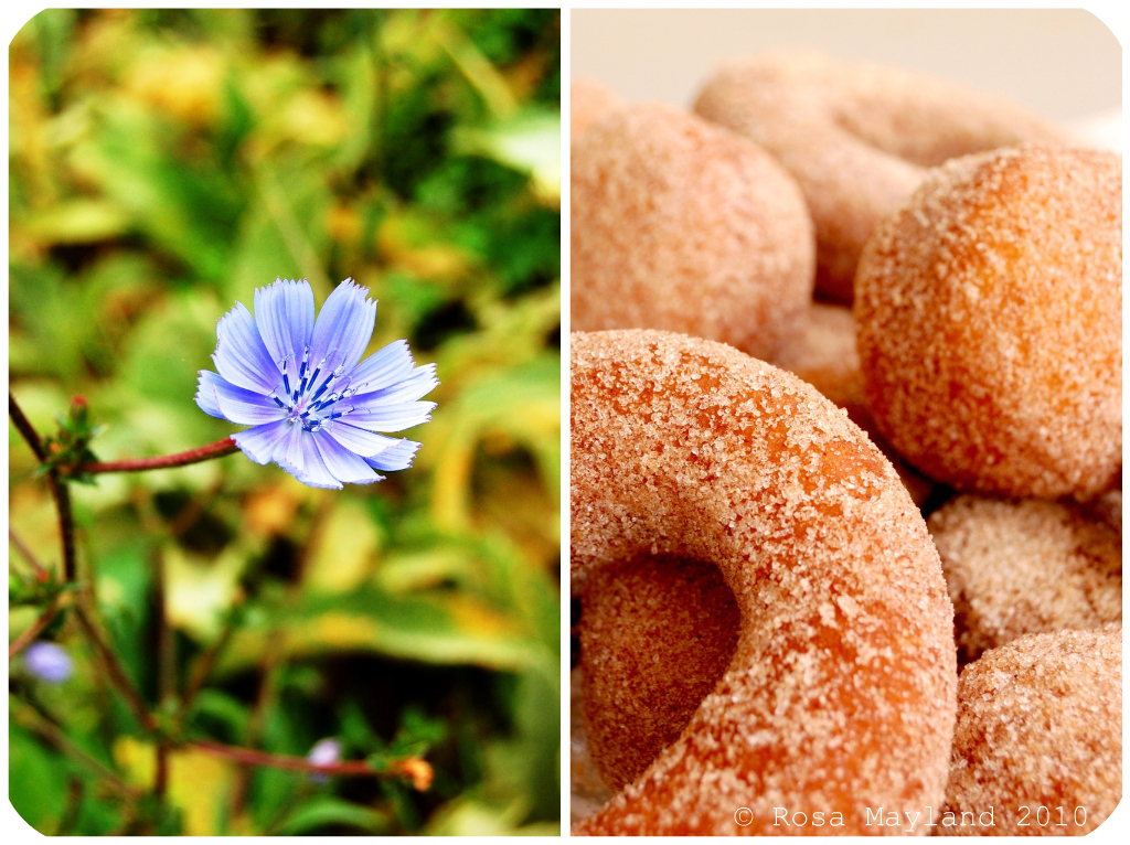 Doughnuts Picnik collage 3 bis