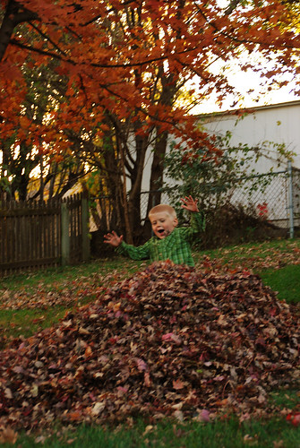 Sliding into the leaves