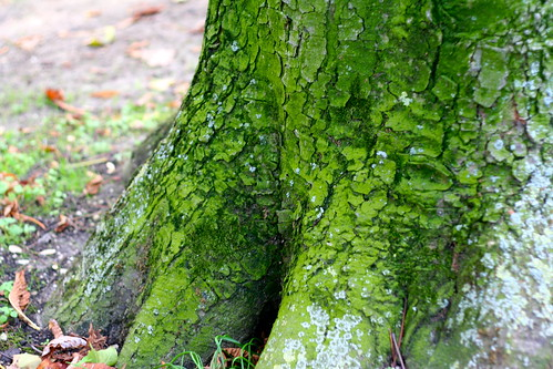 Moss in Musee Rodin