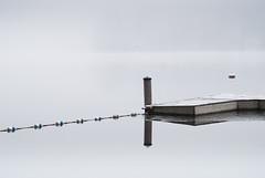(bknapp1606) Tags: seattle winter lake abstract reflection ice water mono still dock pond buoy buoyant