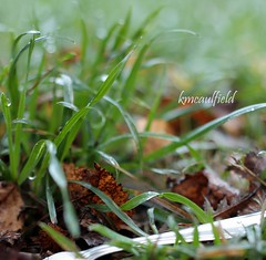 a grassy alternative (RainyDayKelli) Tags: grass leaves oregon dof bokeh fork fiddy lanecounty cottagegrove outsidemydoor circleofconfusion natureycrap twofeetunder psooc hbsitbw