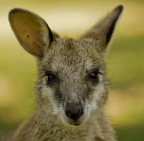 2010_11_Australia__0218