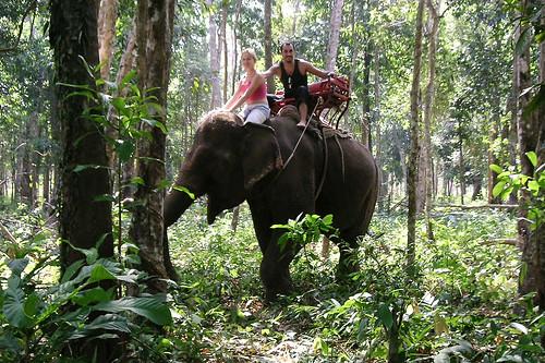 Paseos en elefante en Tailandia